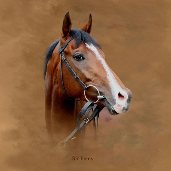 Sir Percy Portrait